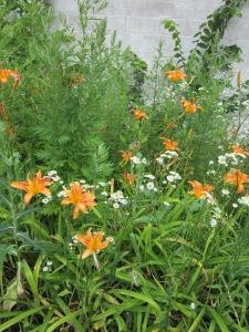 A weedy clump