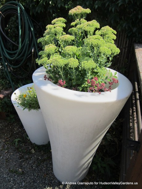 Roof Garden Plastic Pots with Sedum plants