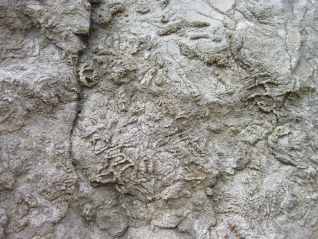 Fossil coral reef, Hudson Valley, NY