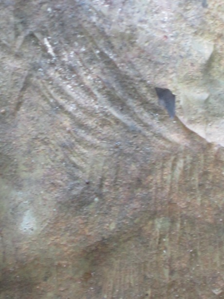 Fossil fern, Hudson Valley, NY
