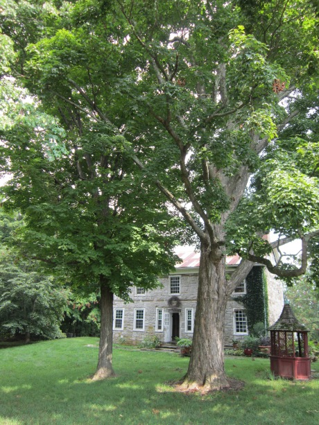 Old stone farmhouse with maple trees, hudson valley NY