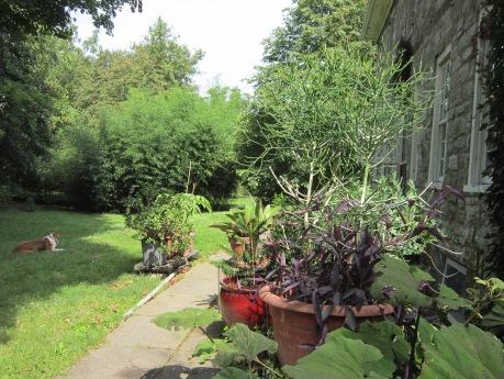plants in pots, front garden