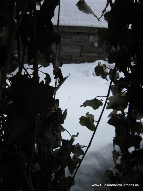 English Ivy and drystone wall, from www.HudsonValleyGardens.us