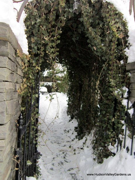 English Ivy arch and metal garden gate, from www.HudsonValleyGardens.us