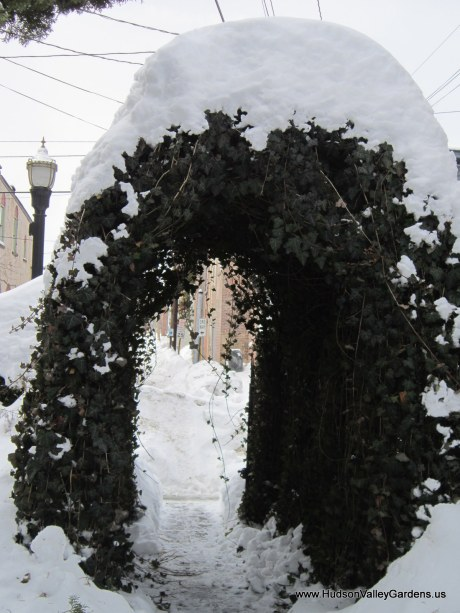 English Ivy arch covered in snow, from www.HudsonValleyGardens.us