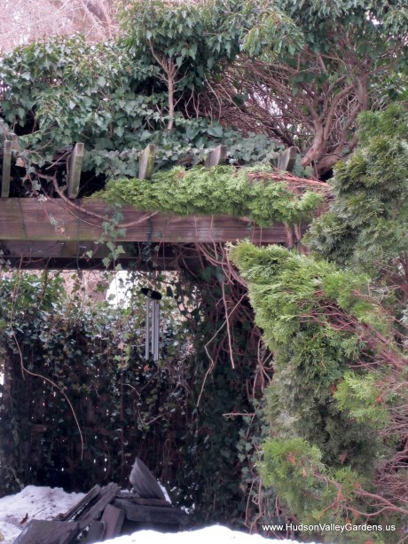 English Ivy covered pergola, from www.HudsonValleyGardens.us