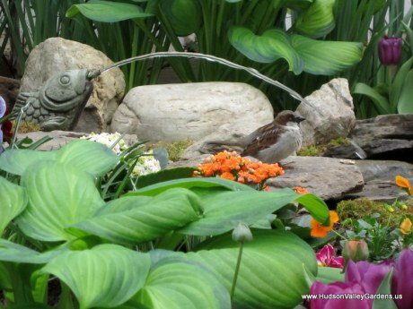 Fish fountain with sparrow, www.HudsonValleyGardens.us