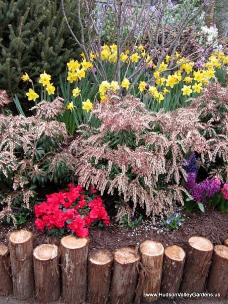 Pieris Shrub in bloom, www.HudsonValleyGardens.us