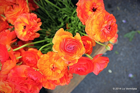 Orange Arunculus flowers. www.HudsonValleyGardens.us