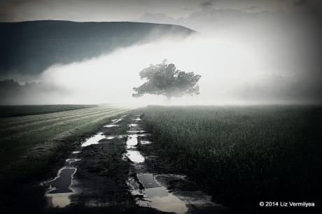 Story Farm fields in the spring mist NY. www.HudsonValleyGardens.us