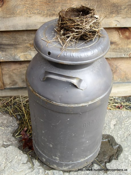 Milk can (with bird's nest!) at Platte Creek Maple Farm in Saugerties NY