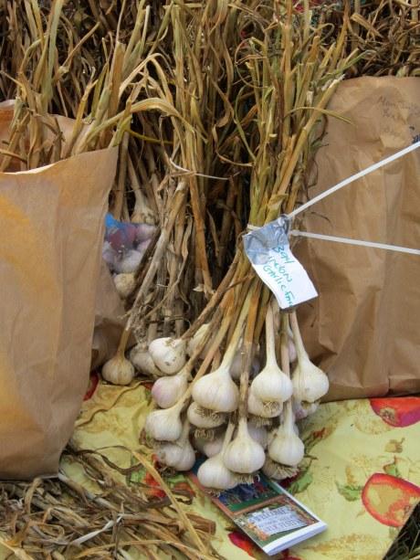 Bunches of garlic by Garlic Delite Farm