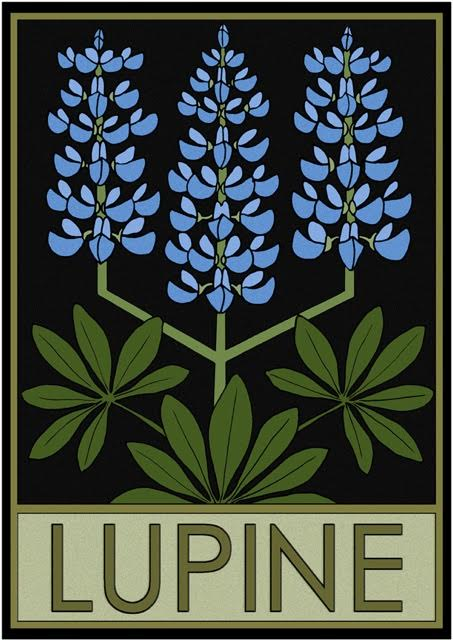 Lupine by Lynne and Richie Bittner, Wildflower Graphics