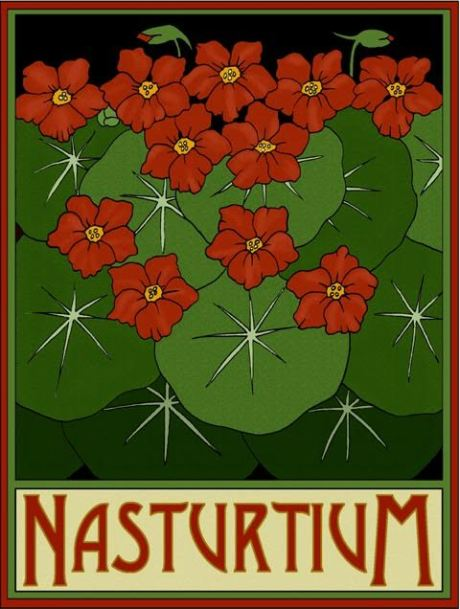 Nasturtium by Lynne and Richie Bittner, Wildflower Graphics