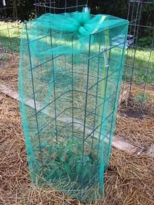 seed saving methods