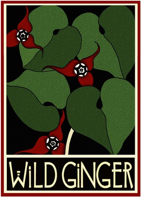 Wild Ginger by Lynne and Richie Bittner, Wildflower Graphics