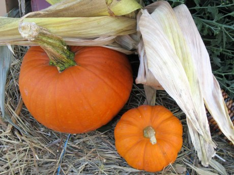 Fall decor - pumpkins and corn