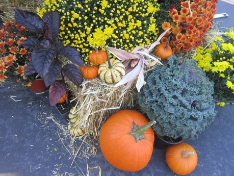 Decorative fall items from a farm - chrysanthemums, squash and cabbage
