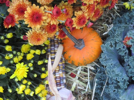 Decorative pumpkin, sweetcorn and chrysanthemum flowers